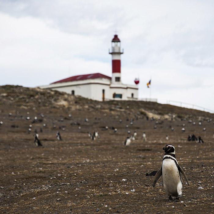 Isla Magdalena, Patagonia, Argentina